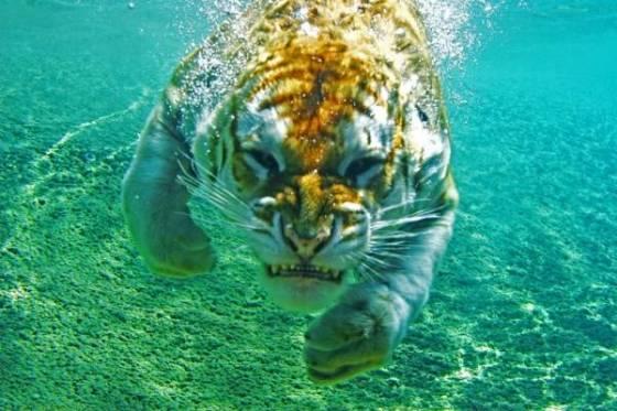Vahşi doğadan fotoğraflar