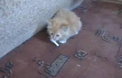 Как отучить кота курить? www.youtube.com. Мальчики и девочки. Эту.