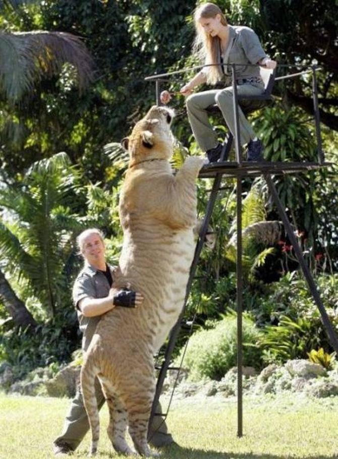 Bu hayvanların büyüklüklerine inanamayacaksınız