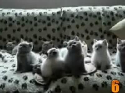 Kedi Videoları Konulu Içerikler Fwmail Kaliteli Içeriğin Adresi